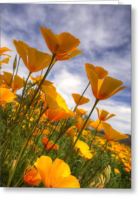 Golden Poppies Greeting Cards - Paint the Desert with Poppies  Greeting Card by Saija  Lehtonen