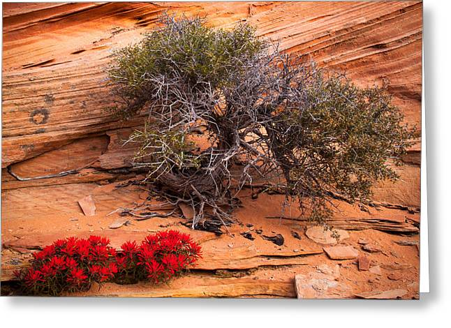 Ledge Greeting Cards - Paintbrush and Juniper Greeting Card by Inge Johnsson