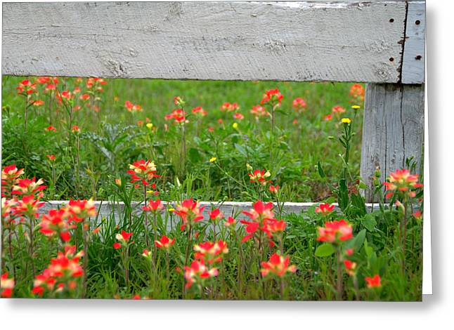 Wild Flowers Of Texas Greeting Cards - Paintbrushes and Fence Posts Greeting Card by Brian Harig