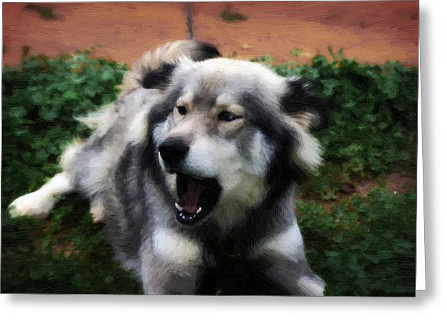 Huskies Mixed Media Greeting Cards - Painted - Blue and Brown Eyed Husky - Series IV Greeting Card by Michael Braham