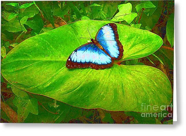 Teresa Greeting Cards - Painted Blue Morpho Greeting Card by Teresa Zieba