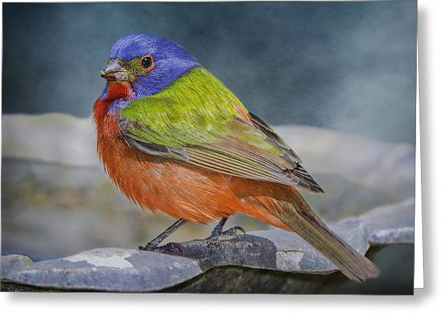 Paint Photograph Greeting Cards - Painted Bunting in April Greeting Card by Bonnie Barry