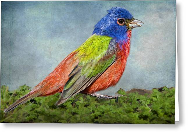 Painted Bunting Portrait Greeting Card by Bonnie Barry