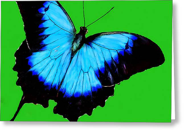 Painted Butterfly Greeting Card by Bob and Nadine Johnston