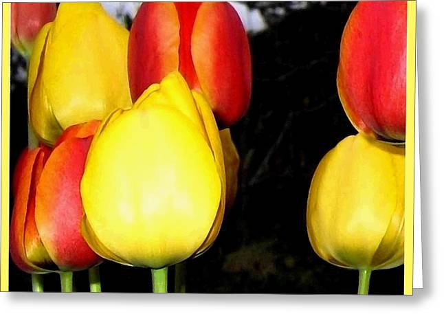 Flash Greeting Cards - Painted Country Tulips Greeting Card by Will Borden