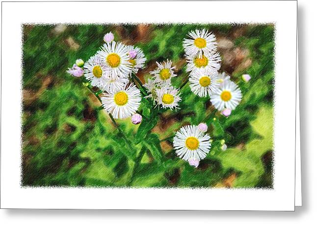 Painted Fleabane Greeting Card by John Haldane