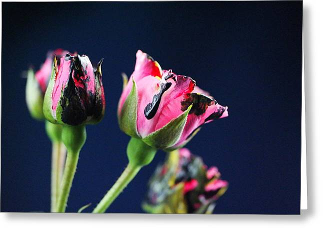 Small Flowers Greeting Cards - Painted flowers  Greeting Card by Jeff  Swan