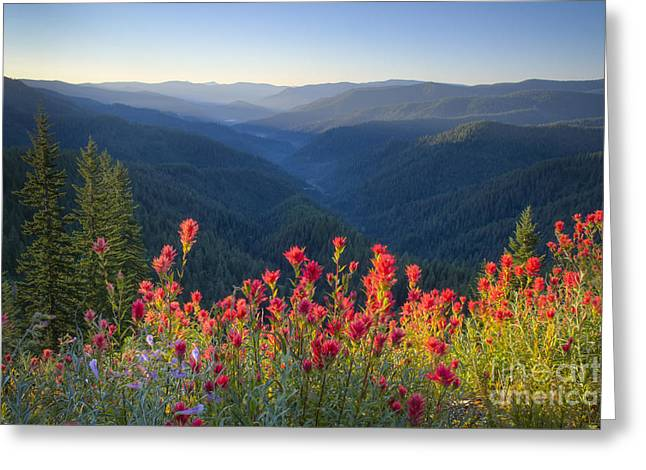 North Idaho Greeting Cards - Painted Forest Greeting Card by Idaho Scenic Images Linda Lantzy