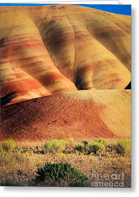 Fossils Greeting Cards - Painted Hills and Grassland Greeting Card by Inge Johnsson