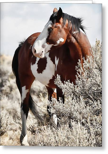 Vale Greeting Cards - Painted Horse Greeting Card by Athena Mckinzie