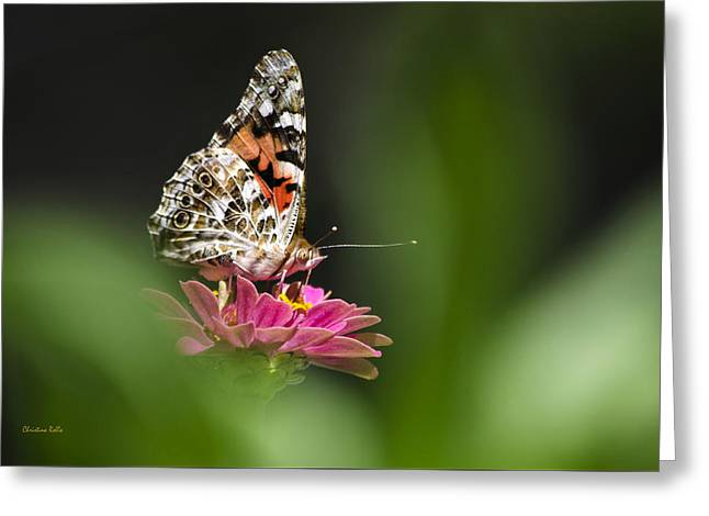 Butterfly On Flower Greeting Cards - Painted Lady Butterfly At Rest Greeting Card by Christina Rollo