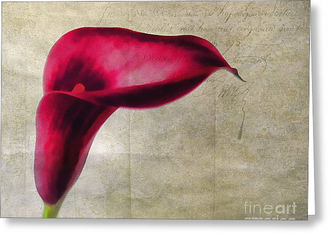 Mother Gift Greeting Cards - Painted Lilly Greeting Card by Darren Fisher