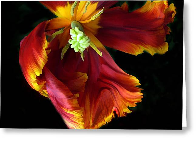 Tulip Petals Greeting Cards - Painted Parrot Petals Greeting Card by Jessica Jenney