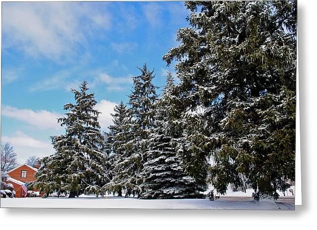 Paint Photograph Greeting Cards - Painted Pines Greeting Card by Frozen in Time Fine Art Photography