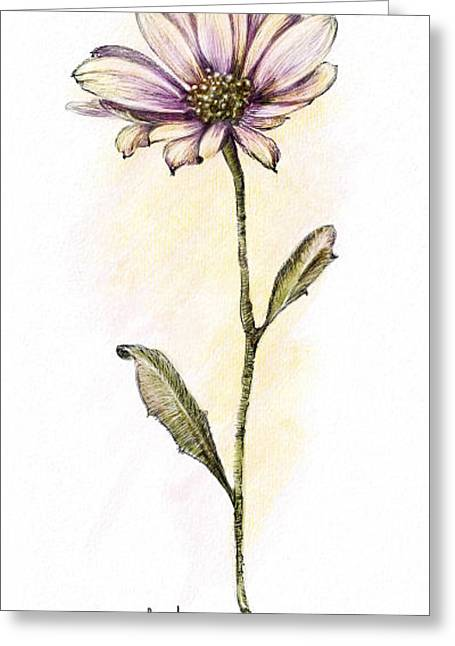 Pen And Ink Framed Prints Digital Art Greeting Cards - Painted Posey Greeting Card by Mary Schonher