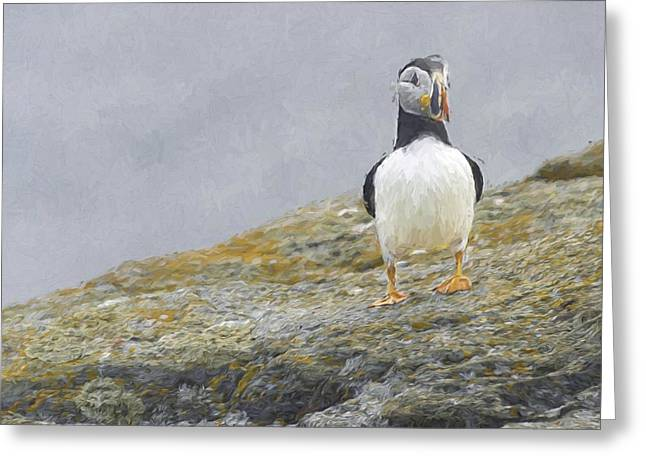 Beek Greeting Cards - Painted Puffin Greeting Card by Jim  Hatch