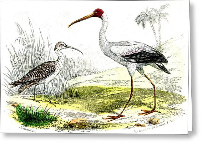 Painted Storks Greeting Card by Collection Abecasis