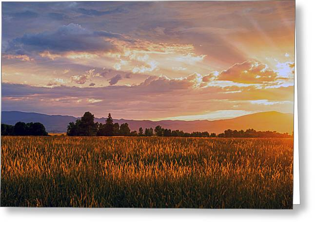 Painted Sunset Greeting Card by Dana Moyer