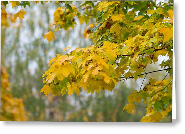 October Framed Greeting Cards - Painted Veil - Featured 3 Greeting Card by Alexander Senin