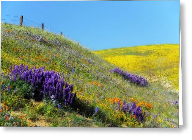 Painted With Wildflowers Greeting Card by Lynn Bauer