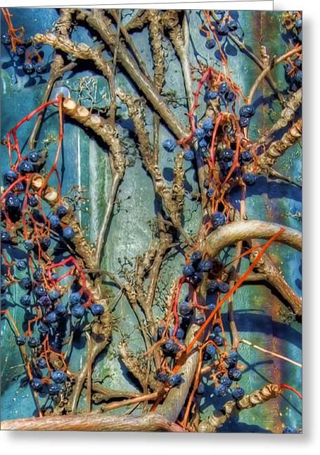 Fruit Tree Art Greeting Cards - Painted Woodbine Greeting Card by Joann Vitali