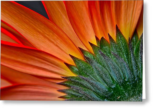 Dropping Greeting Cards - Painters Brush Greeting Card by Frozen in Time Fine Art Photography