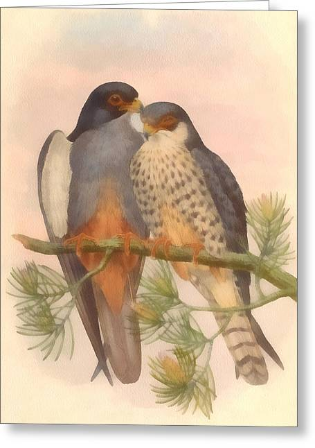 Migratory Bird Greeting Cards - Pair Amur Falcons Greeting Card by Vintage File Collection
