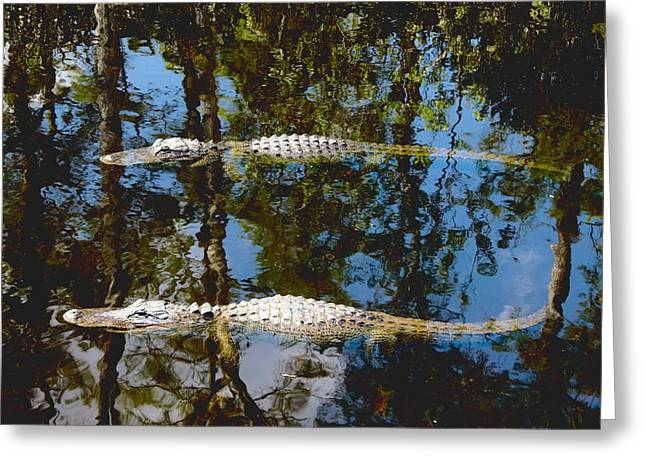 Bask Greeting Cards - Pair of American Alligators Greeting Card by Rudy Umans