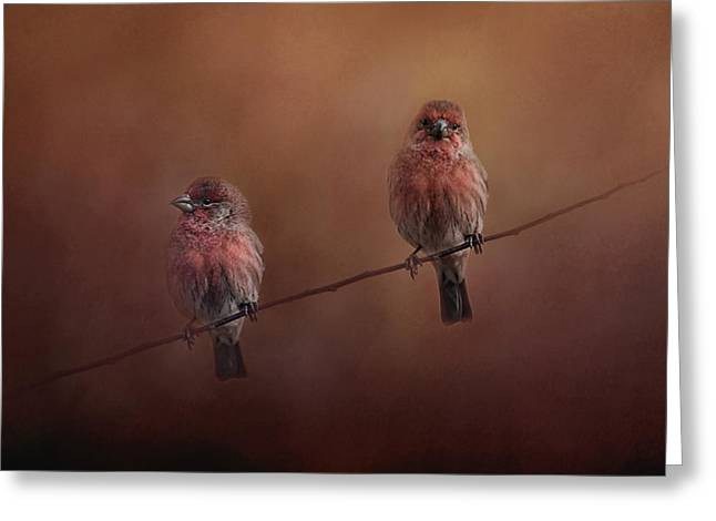 House Finch Greeting Cards - Pair of Finches Greeting Card by Jai Johnson