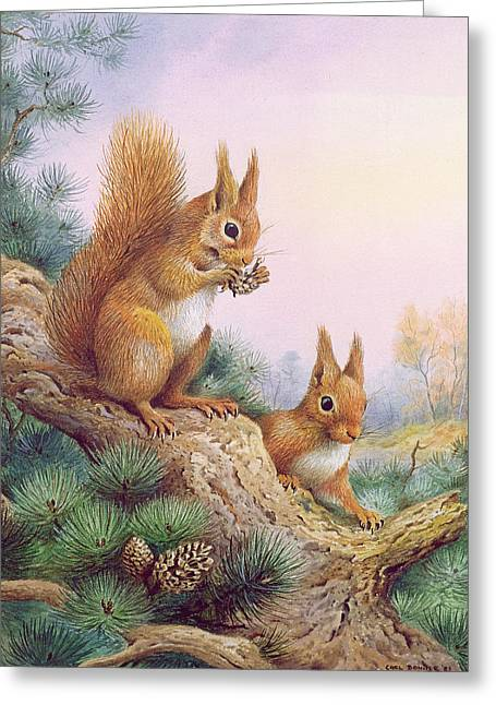 Pine Cones Photographs Greeting Cards - Pair Of Red Squirrels On A Scottish Pine Greeting Card by Carl Donner