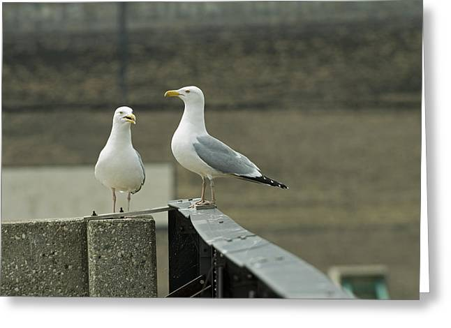 Negotiating Greeting Cards - Pair of Seagulls Greeting Card by Devinder Sangha
