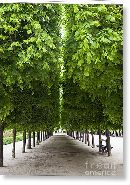 Line Of Trees Greeting Cards - Palais Royal Trees Greeting Card by Brian Jannsen