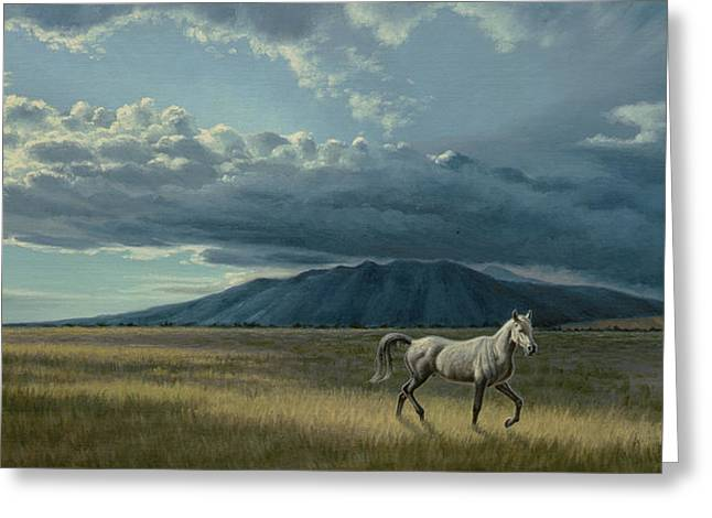 Colorado Greeting Cards - Pale Horse Greeting Card by Paul Krapf
