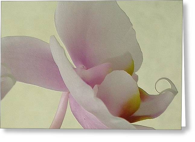 Innocence Greeting Cards - Pale Orchid on Cream Greeting Card by Barbie Corbett-Newmin