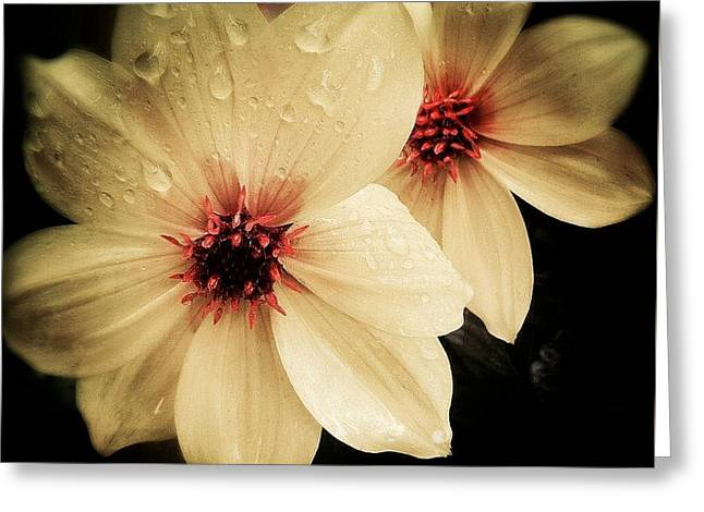 Grow Something Greeting Cards - Pale Rain Greeting Card by Sue Small