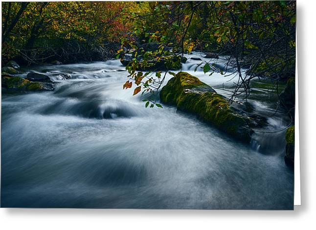 Overcast Day Greeting Cards - Palisades Creek Idaho in Fall Greeting Card by Vishwanath Bhat
