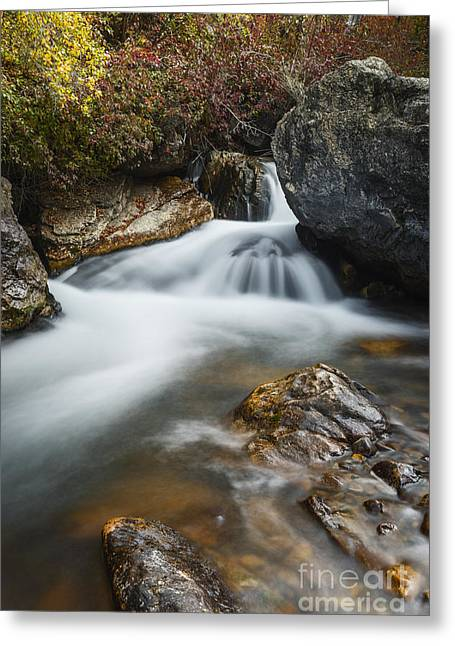 Overcast Day Greeting Cards - Palisades Creek in Idaho Greeting Card by Vishwanath Bhat