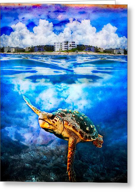 Palm Beach Under And Over Greeting Card by Debra and Dave Vanderlaan