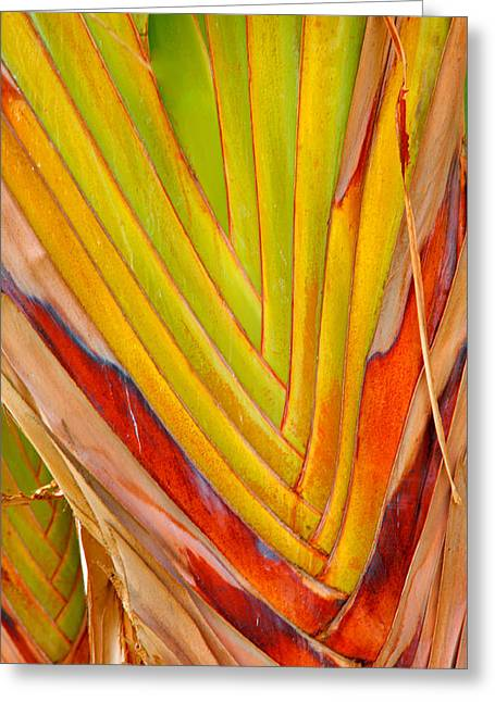 Close Up Framed Prints Greeting Cards - Palm Colors Greeting Card by Steven Ainsworth