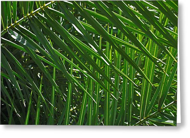 Green Leaves Greeting Cards - Palm Crosshatch Greeting Card by Rona Black