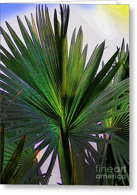 Al Central Greeting Cards - Palm Fan in David - Panama Greeting Card by Al Bourassa