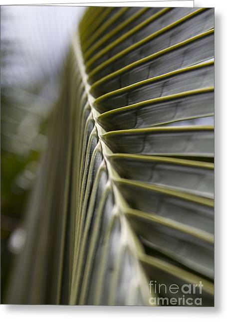 Fruit Tree Art Print Greeting Cards - Palm Frond botanical abstract Greeting Card by Sharon Mau
