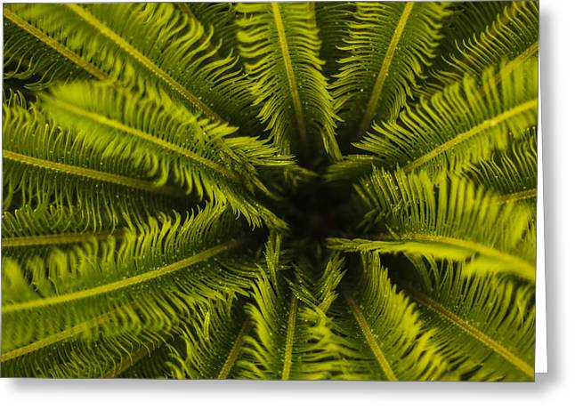 Palm Fronds Greeting Card by Amber Kresge