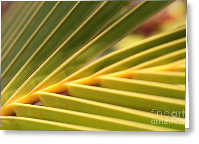 Niu Greeting Cards - Palm Fronds Greeting Card by Sharon Mau