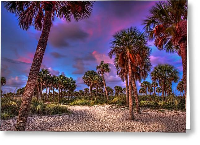 Palm Grove Greeting Card by Marvin Spates