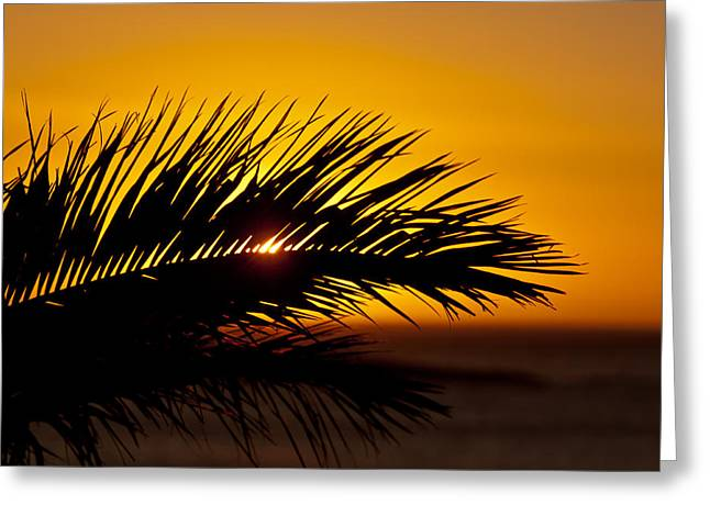 Dream Scape Greeting Cards - Palm Leaf In Sunset Greeting Card by Yngve Alexandersson