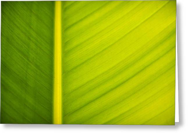 Palm leaf macro abstract Greeting Card by Adam Romanowicz