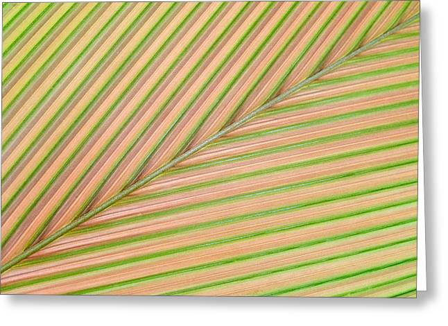 Palm Leaf, Sarapiqui, Costa Rica Greeting Card by Panoramic Images