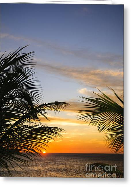 Reflection Of Sun In Clouds Greeting Cards - Palm Leaves and Tropical Sunset Greeting Card by Oscar Gutierrez
