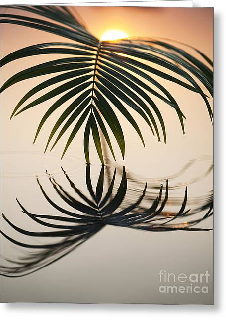 Palm Light Greeting Card by Tim Gainey